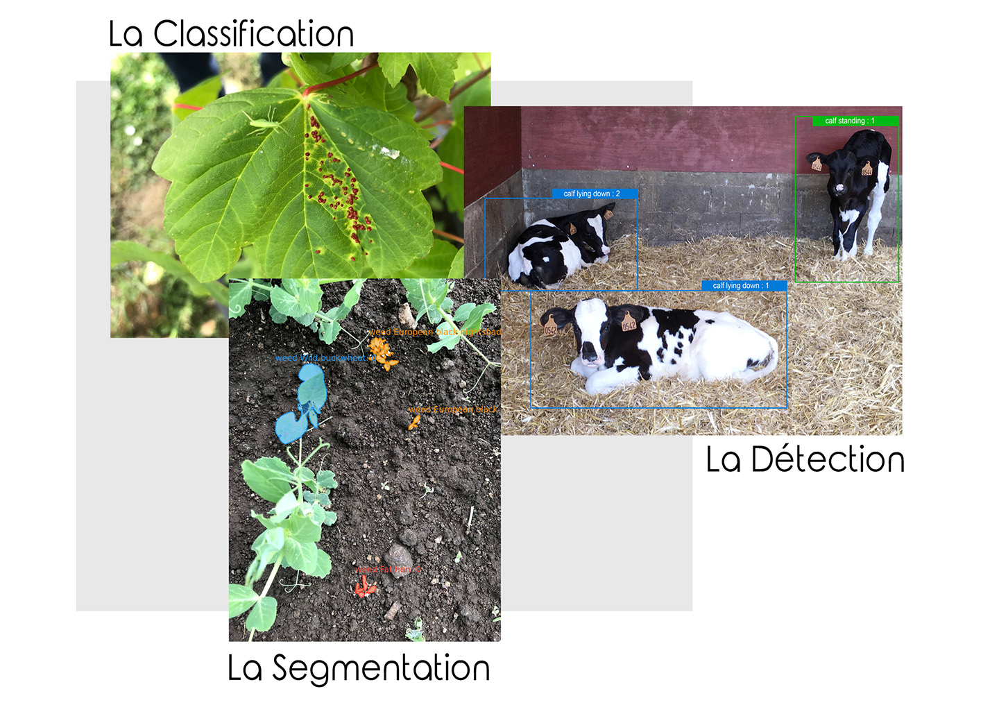 annotations-images-agricultures-dilepix