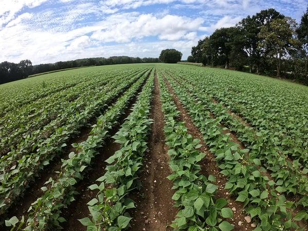 production-vegetale