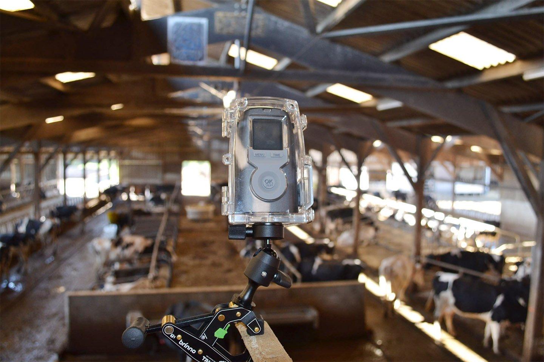 camera-surveillance-automatique-batiment-bovins